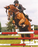 Dutch Sport Horse - Mosiak