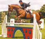 Show Jumping Mare