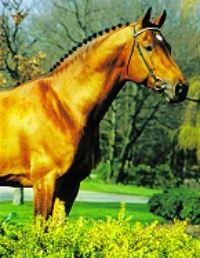 N-Aldato - Stallion