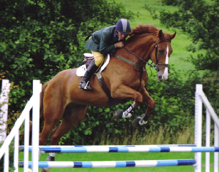 Sport Horses For Sale - High Offley Stud - Equestrian News ... - photo#27