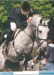 Parco - Showjumping Stallion
