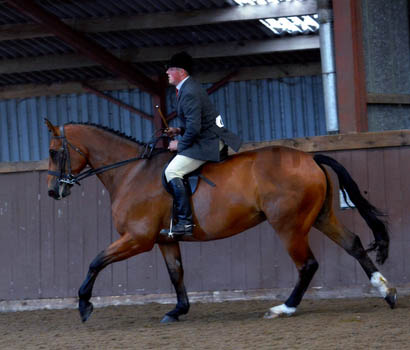Ridden Hunter For Sale - Buggs Bunny