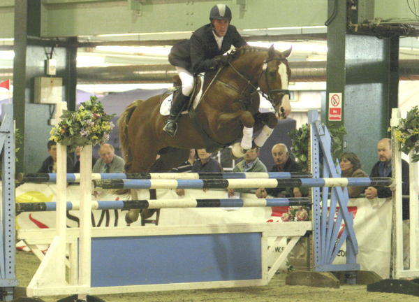 British Showjumping Stallion