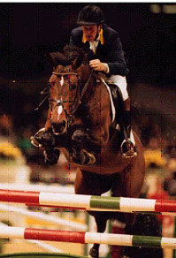 Zandor Z - Show Jumping Stallion