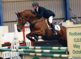 Sport Horses For Sale